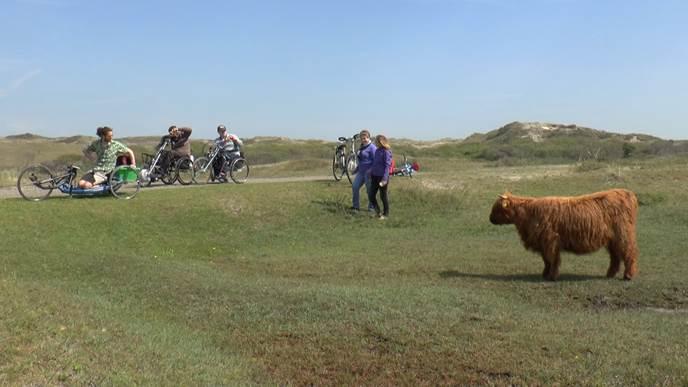 По дороге встретили буйволов