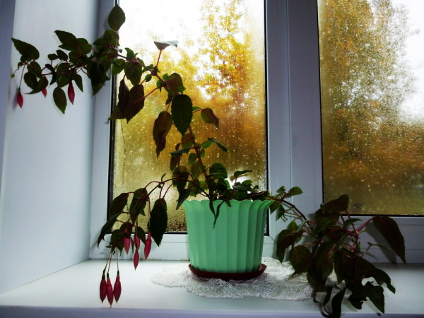 2 место — «Моё окно — мой мир». Автор Млявая Марьяна Георгиевна.